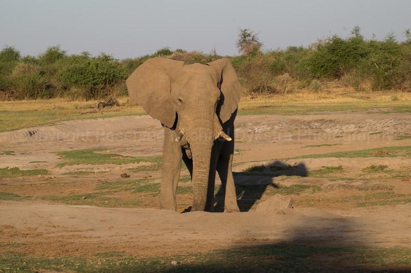 Madikwe-56.jpg