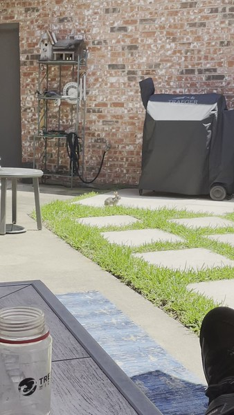 Bunny Phone Pics (2021)
