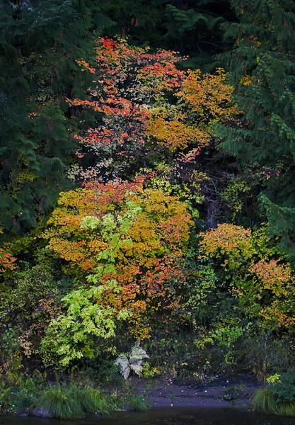 Oregon Fall 1