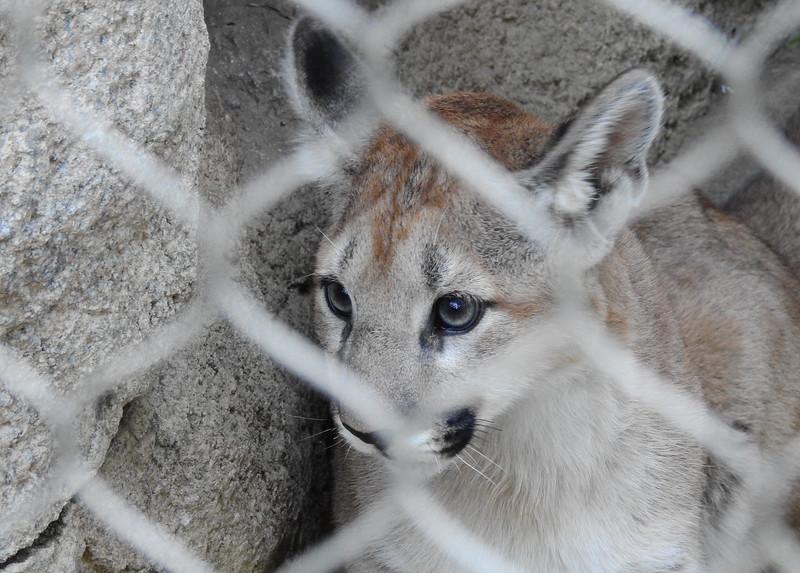 Cheyenne Mtn Zoo 2019 (1206).JPG