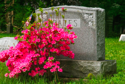 flower-shop-owner-accused-of-stealing-plants-from-cemetery