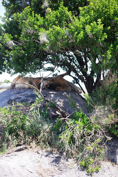 Serengeti (194).JPG