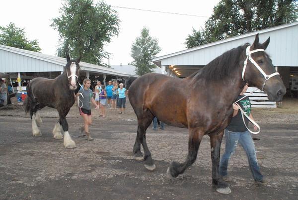 4-H Parade of Champions at the Benton County Fair