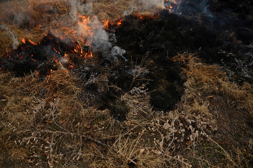 . DENVER, CO. - MARCH 07: The Denver Botanic Gardens conducts a controlled burn of the Laura Smith Porter Plains Garden, March, 07, 2013. Fires are a natural part of the plains ecology and help balance the diversity of species. The burn will aid in the germination and growth of different species in the garden. (Photo By RJ Sangosti/The Denver Post)