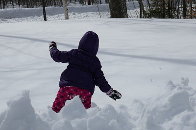 Joss in Feb Snow