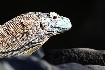 San Diego Zoo - Feb 27, 2011