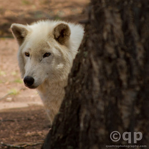 Colorado Wolf and Wildlife Center, Colorado