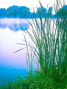 Early morning on a Louisiana lake