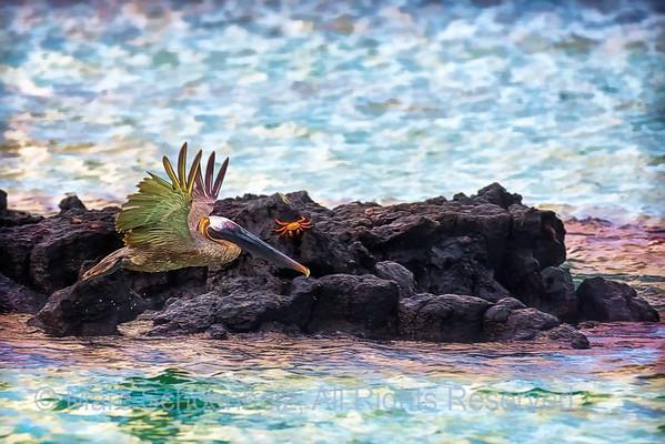 Galapagos I -  Miami to Galapagos;  Santa Cruz, Las Bachas