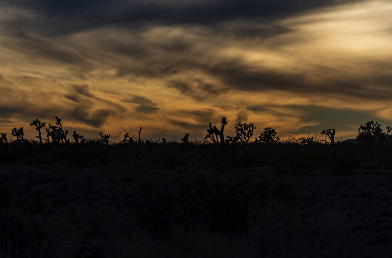 Joshua-tree-forest-sunset.jpg