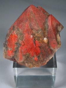 9 red specimens