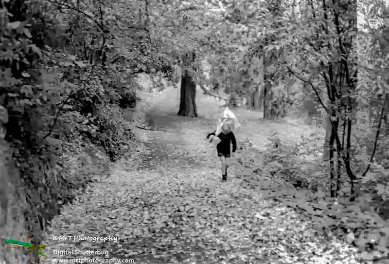 197X_Botanical_gardens_in_autumn_-_Dunedin-Edit.jpg