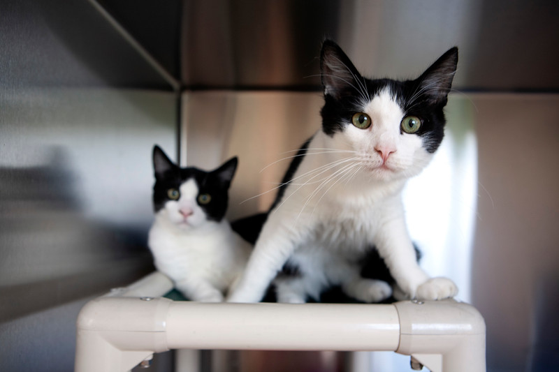 Northeast Aniimal Shelter: Simon  122505   and Seth. 122506NEAS October  7, 2019Photo by Amy Sweeney