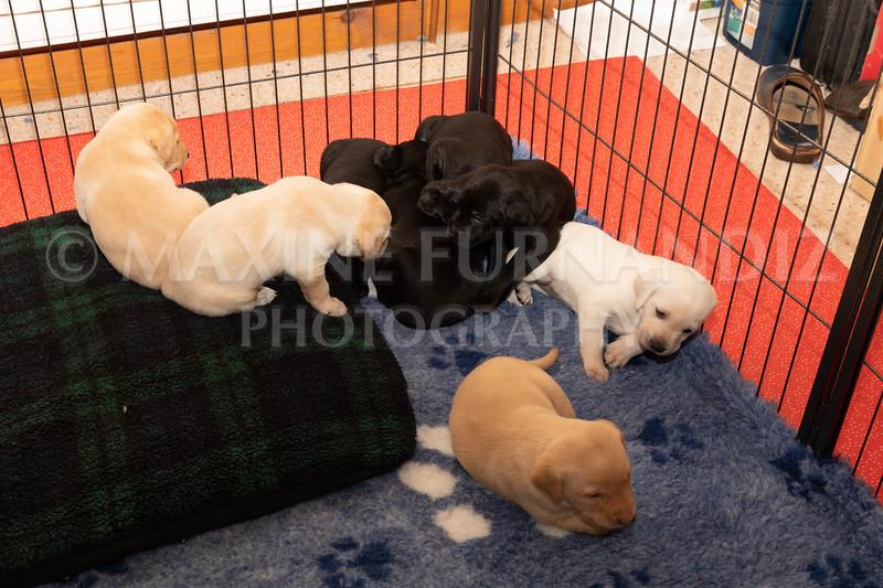 Weika Puppies 2 Mar 2019-8487.jpg