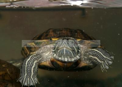 Turtle & Tortoise Pageant 082706