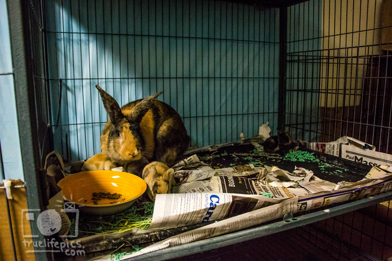 August 16, 2016 12 day old kits visit Daddy Bunny (7).jpg