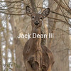 White-tailed Deer #1