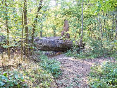 2012-10-07 Bella Vista