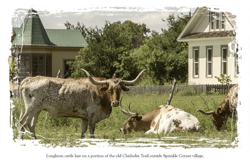 Postcard back Longhorns.jpg