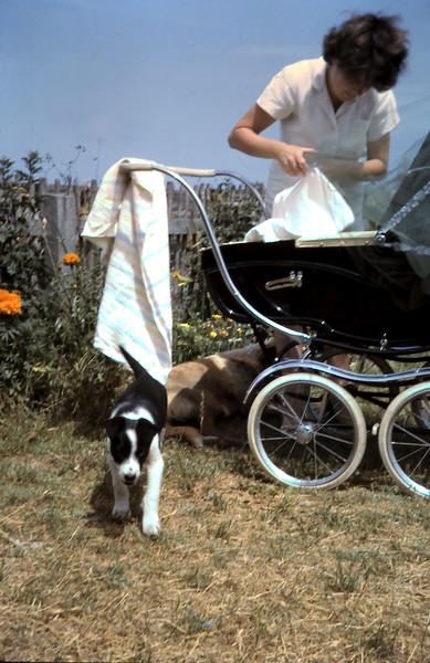 1963-12-28 (2) David 3 wks.JPG