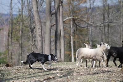 Rhinebeck herding clinic