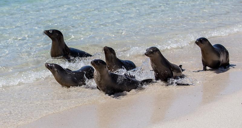 Galapagos_MG_4901.jpg