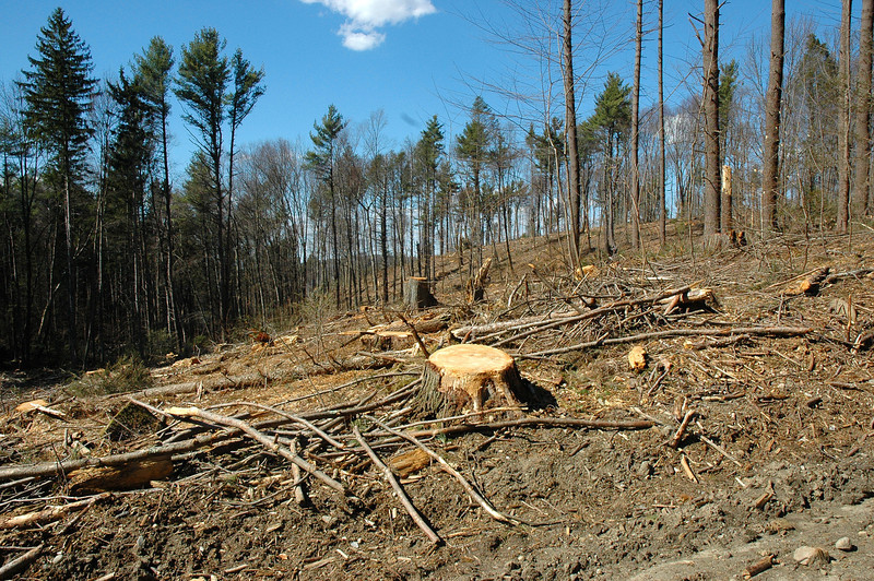 There are several acres so stripped so far, with many more slated for the same treatment.