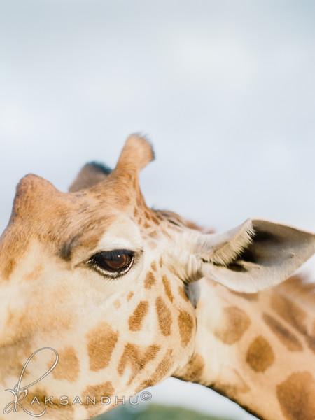 Safari-Africans-142.jpg