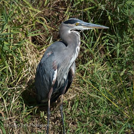 Ridgefield Wildlife Refuge Sept 2014