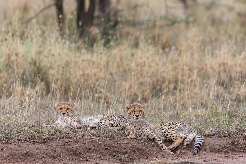 Tanzania_Feb_2018-1237.jpg