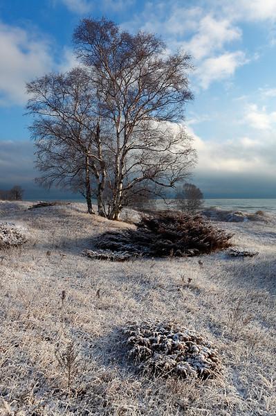 Tree in Snow - Kohler-Andrae State Park, WI
