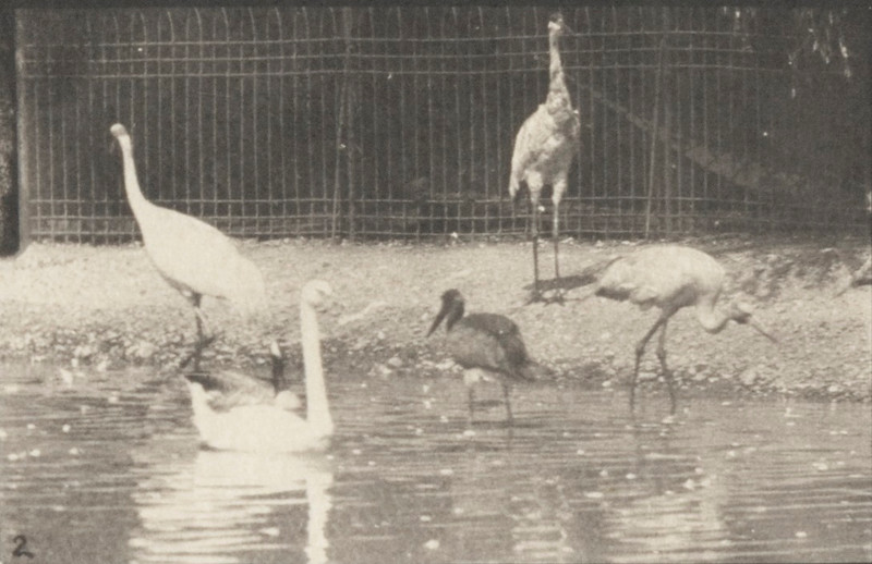 Storks, swans, and other birds