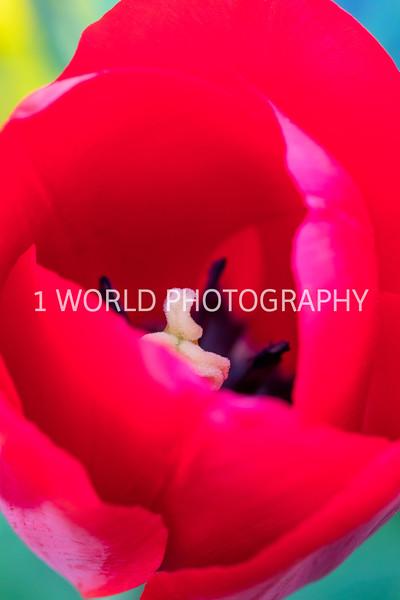 Cantigny Spring '17-91-40.jpg