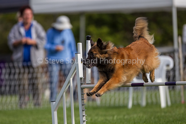 Del Monte KC Agility Trial - June 3rd, 2017