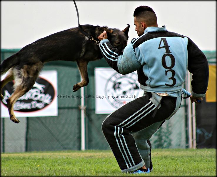 PSA - Protection Sports Association Photography