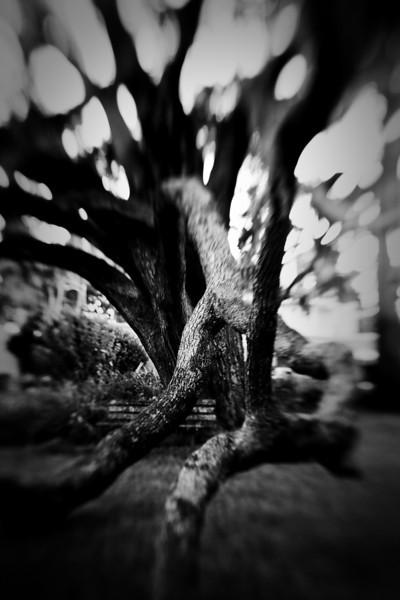 Lensbaby_tree_20091105_215.jpg