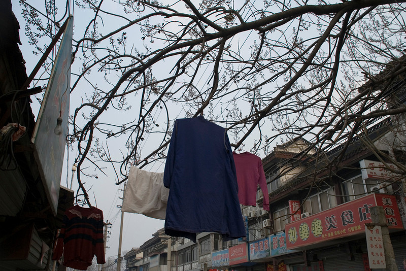 205 Clothes on Trees.jpg
