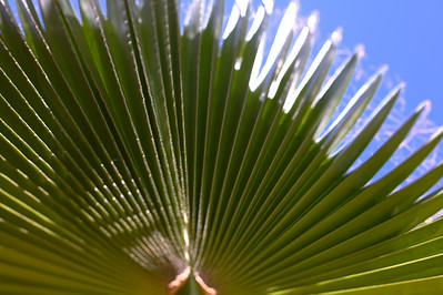 Getty Villa - Fan Shaped Palm