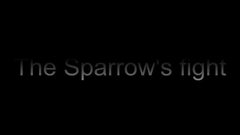 Activity around the feeder.... sparrow's fight