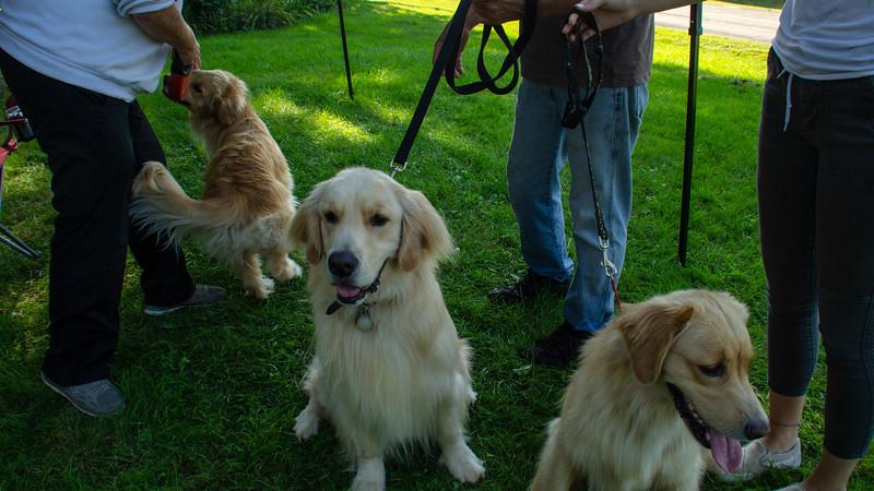 PuppyParty18-570.jpg