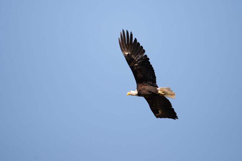 Freebird 6043