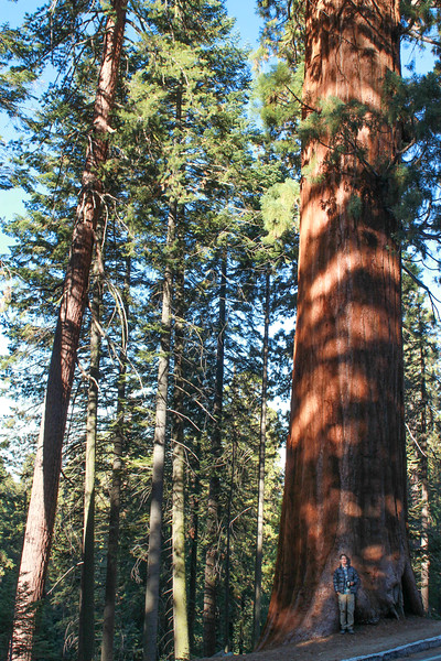 Matt in front of Sequoia*.jpg