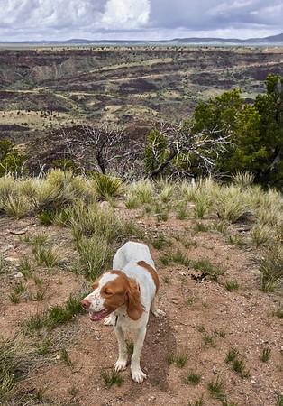 Devo runs, hikes, rests on new blanket