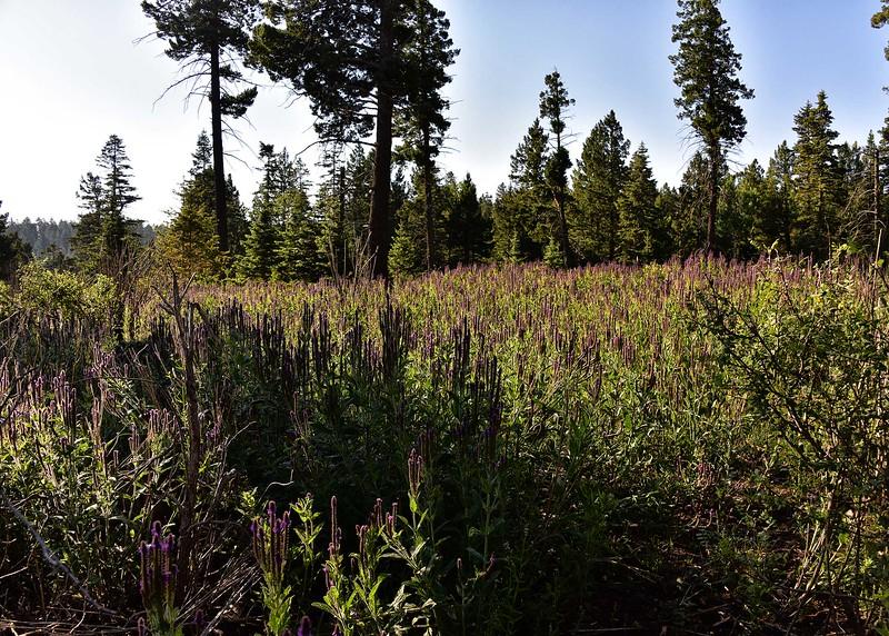 NEA_0020-7x5-Wildflowers.jpg