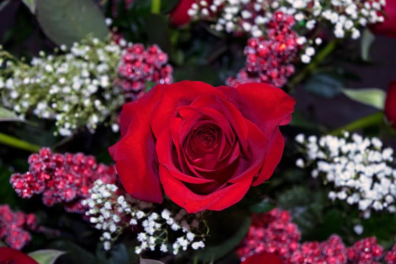 ValentinesDayRoses6.jpg
