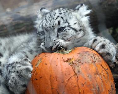 Stone Zoo, October 7, 2018