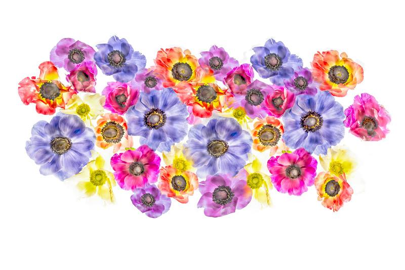 1116_Illuminated_Flowers-25-Edit_copy.jpg