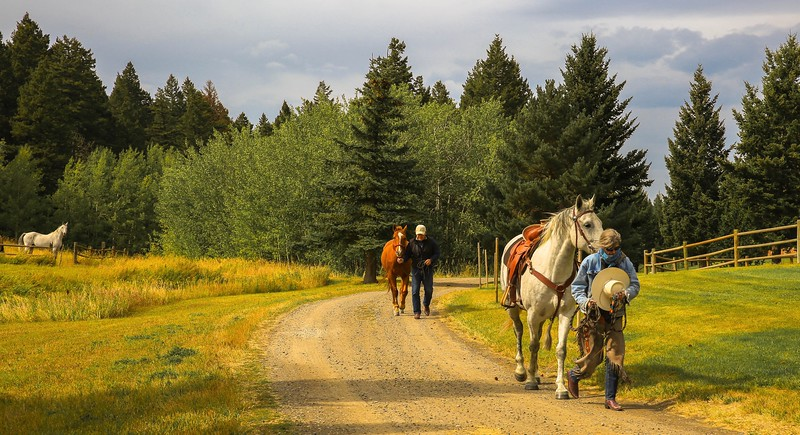 Dan & horses 7.jpg