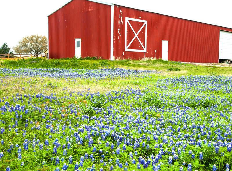 2015_4_3 Texas Wildflowers-7519.jpg