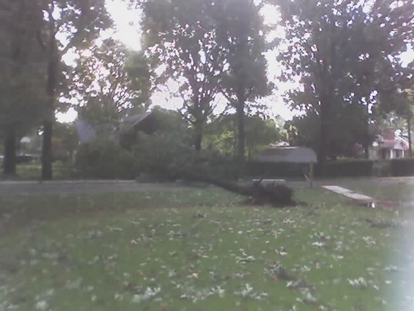 hurricaine Ivan tree down.jpg